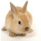 Кролик декоративний