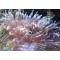Морська акваріумістика (4)