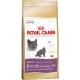 Корм сухий для котів породи британська короткошерста Royal Canin British Shorthair 34, на вагу (100гр)